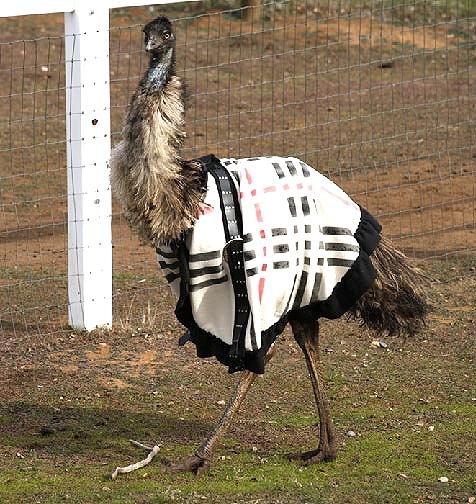 Kleidung für Tiere nähen